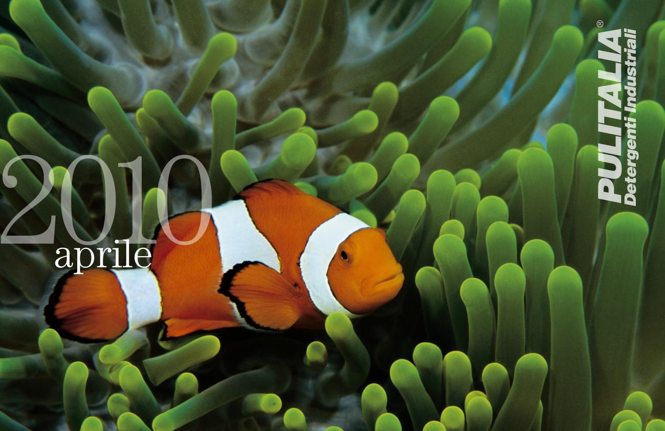 Strumenti di promozione-promotional activities: calendario 2010 calendar Pulitalia